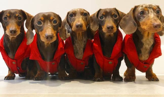 Harriet says the dogs' wardrobe is bigger than her own (Credit: Caters)