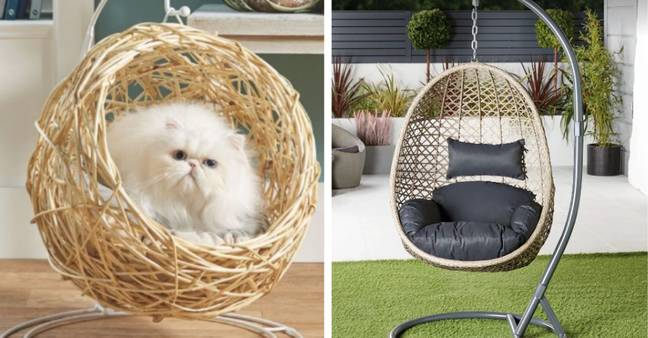 The pet egg chair means even cats can now get on on the interior trend (Credit: Aldi)