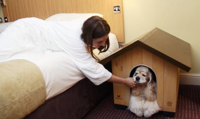 Dogs get their own handmade kennel (Credit: Caters)