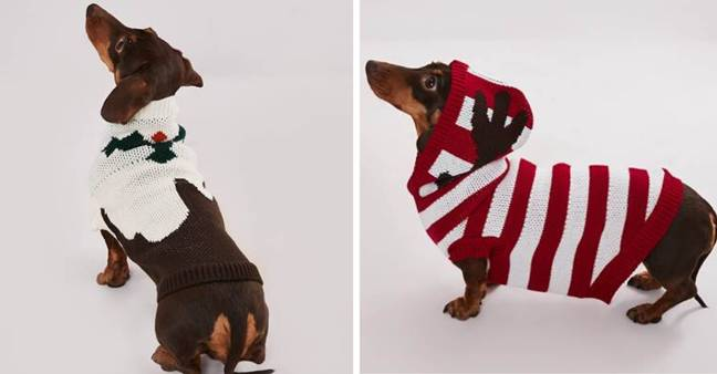 The dog sweaters are £12 apiece. (Credit: Missguided)