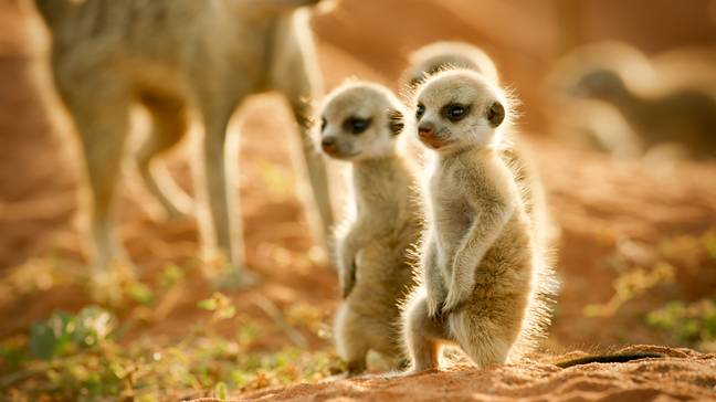 The documentary follows animals as they take their first steps into the world (Credit: Sky Nature)