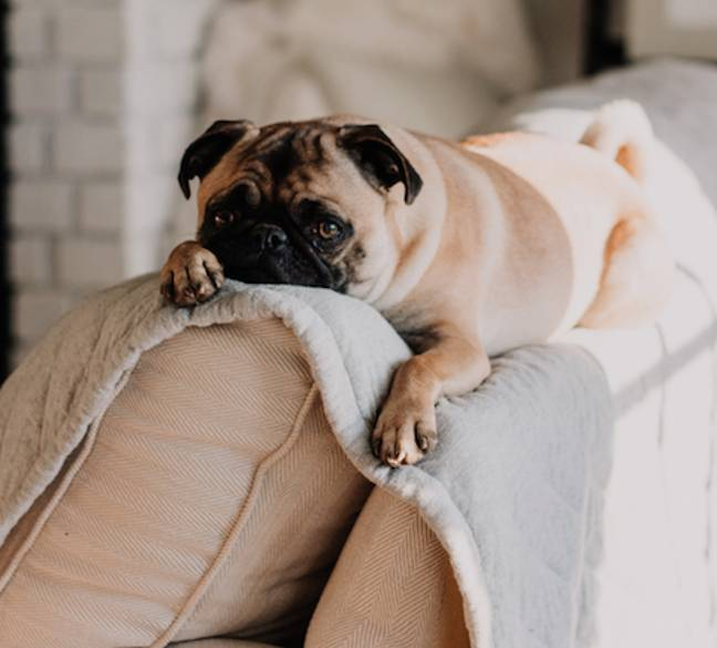 Avoid puppy-dog eyes this Easter (Credit: Unsplash)