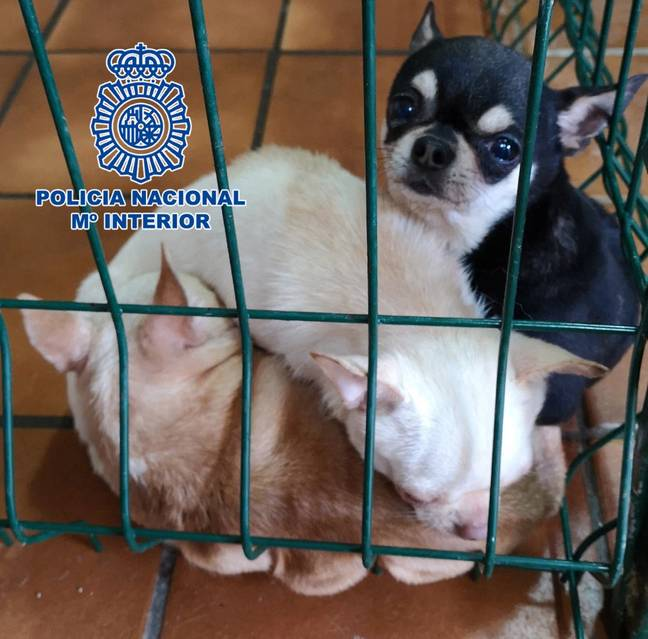 The dogs were found in unhygienic conditions (Credit: CEN/National Police)