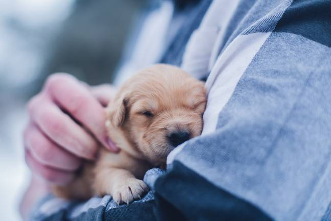 Puppies are being separated from their mothers too early and needlessly dying and suffering (Credit: Unsplash)