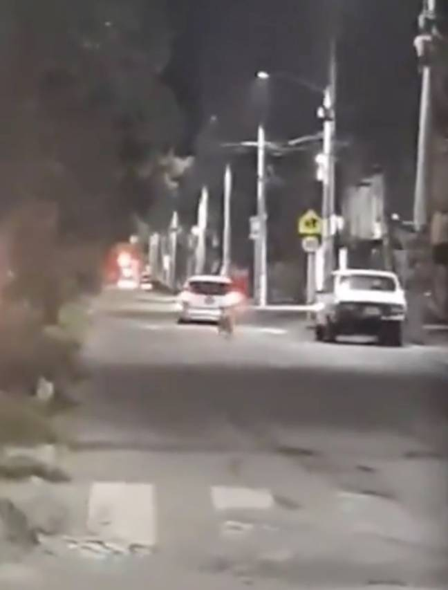 The dog can be seen chasing its owners down the road (Credit: @ColombiaOscura/Newsflash)