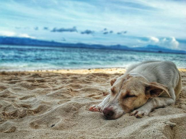 Dogs can suffer in hot weather (Credit: Pexels)