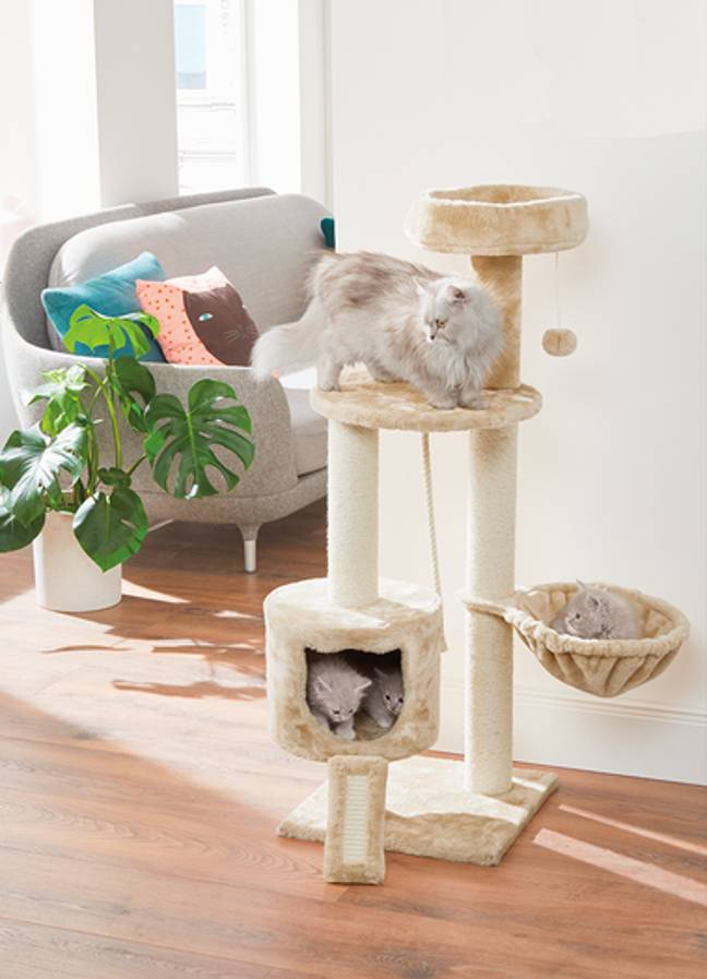 The multi-level Zoofari Cat Scratching Post (£29.99) comes with a hammock and toy ball attached (Credit: Lidl)