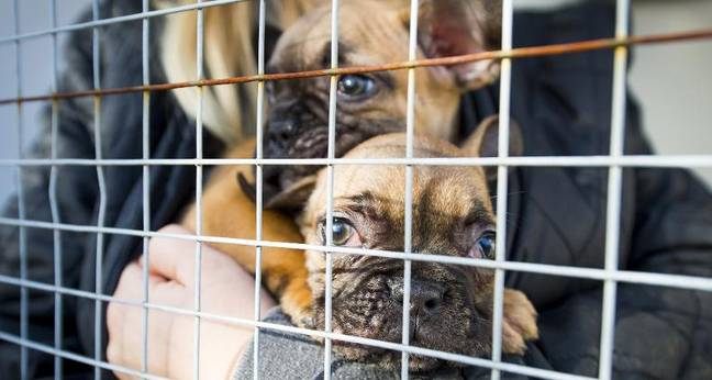 Dogs Trust have been fighting against puppy smuggling for years (Credit: Dogs Trust)