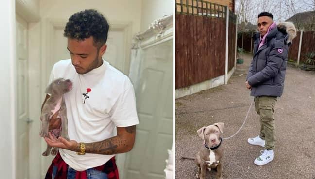 Harley Benn and his dog, King (Credit: Instagram/harleybennofficial)