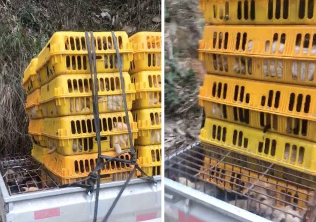 Dogs rescued from crates at the back of a truck (Credit: Facebook/ No To Dog Meat)