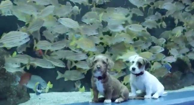 The puppies had the best time (Credit: Atlanta Humane Society)