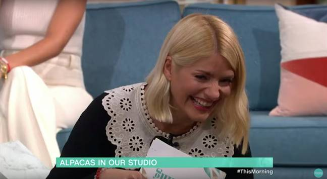 Holly completely lost it at the alpaca moment (Credit: ITV)