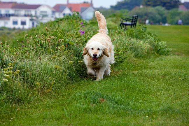 Make sure your dog has good recall before letting them off the lead (Credit: Pixabay)
