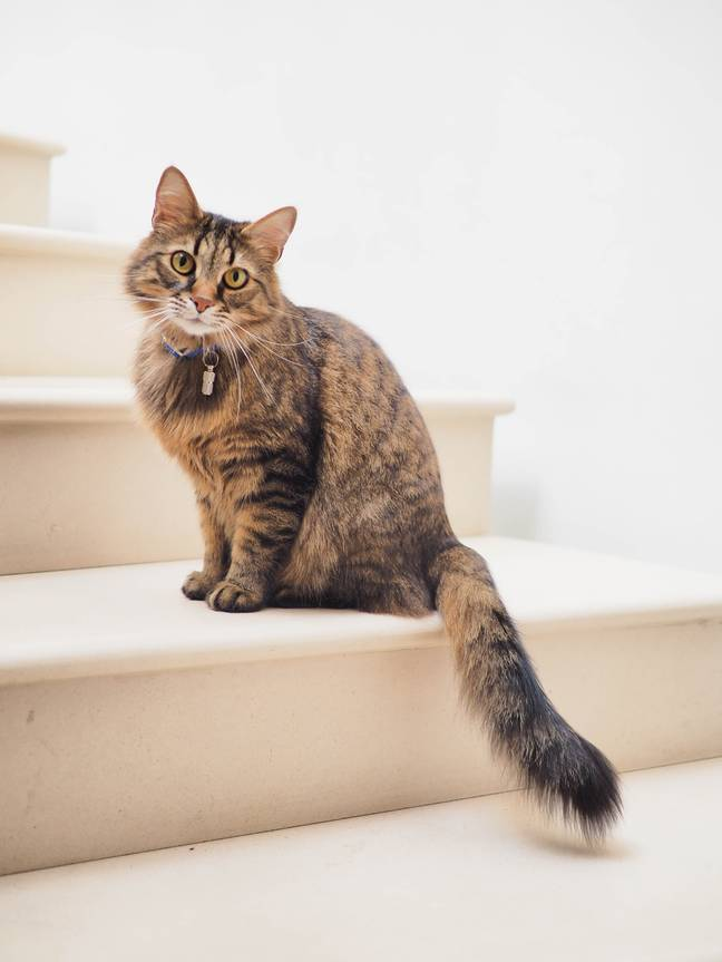 Your pet cat might be allowed to move properties with you (Credit: Unplash)
