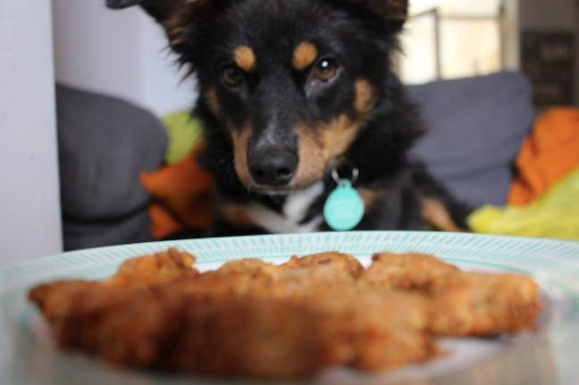 Will your mouthwatering cooking entice your pup? (Credit: Dog Furiendly)