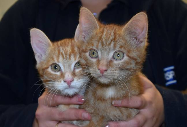 The cats are named Stuffing and Bisto (Credit: SWNS)
