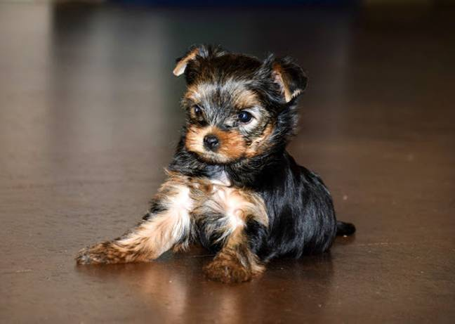 Bella was the most popular name for dogs this year (Credit: Shutterstock)