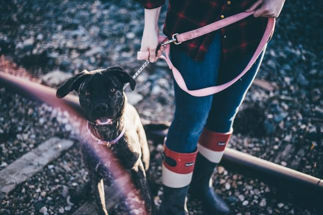93 per cent of owners said they want to walk their dog more. Credit: Unsplash
