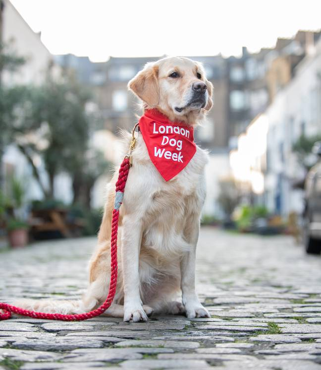 It's unsurprising that these fur babies bring us so much happiness - something London Dog Week seeks to raise awareness of (Credit: London Dog Week)