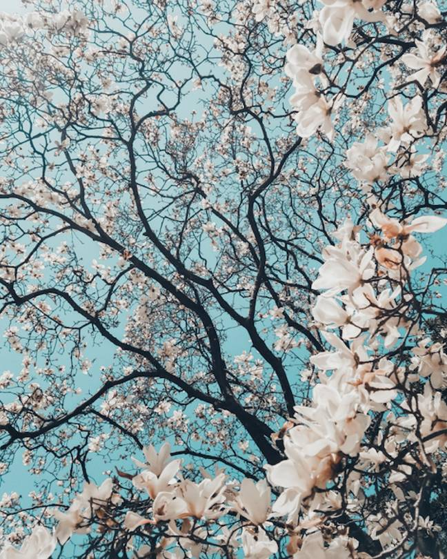 Spring has officially sprung (Credit: Unsplash)