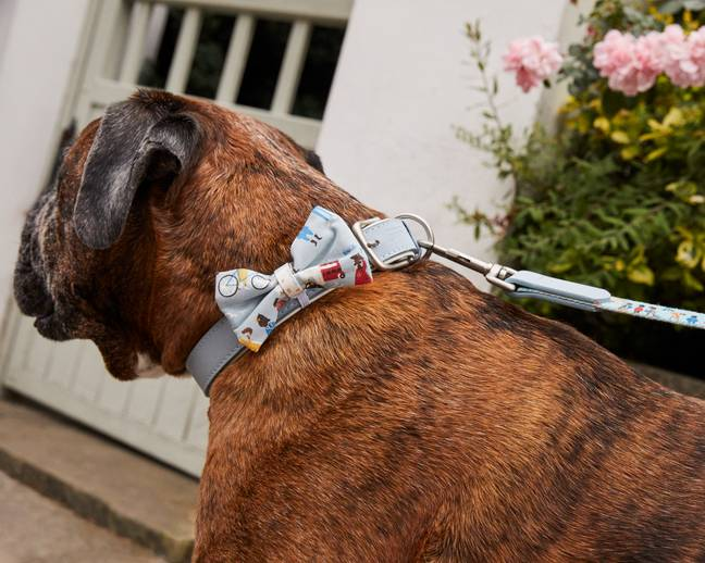 You've got until midnight on Wednesday 21st October to enter your pup (Credit: Cath Kidston)