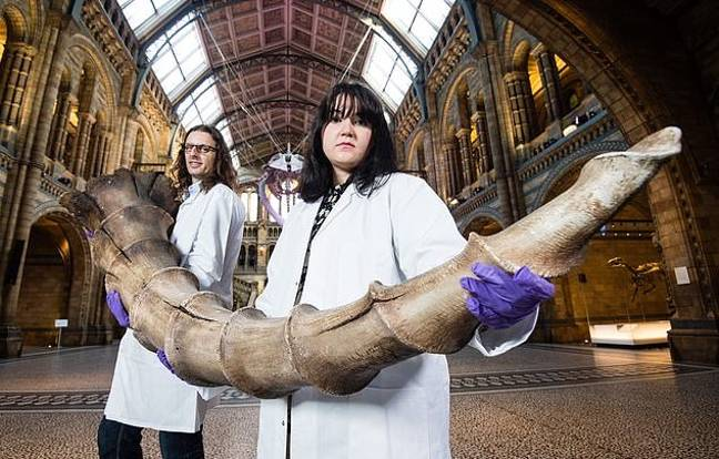 The documentary accompanies a blockbuster exhibition at London's Natural History Museum titled 'Fantastic Beasts: The Wonder of Nature' (Credit: Natural History Museum)