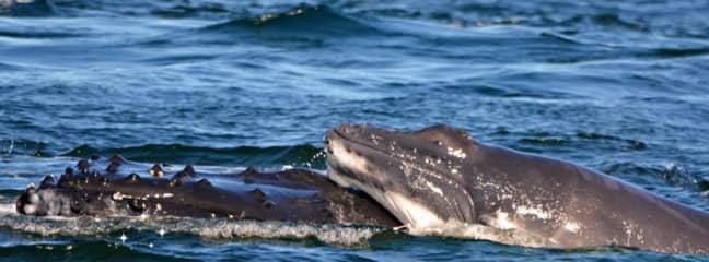 Credit: Whale Watch WA