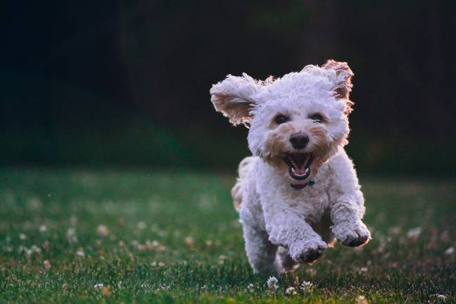 Dogs suffer from hay fever too (Credit: Unsplash)