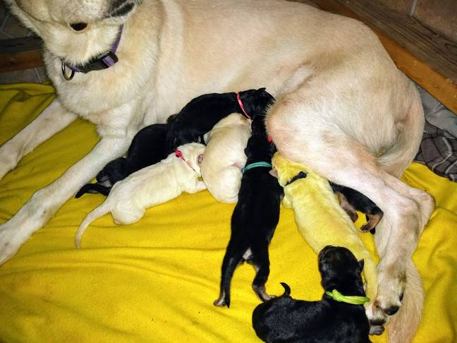 The little puppy was born neon green (Credit: Caters News Agency)