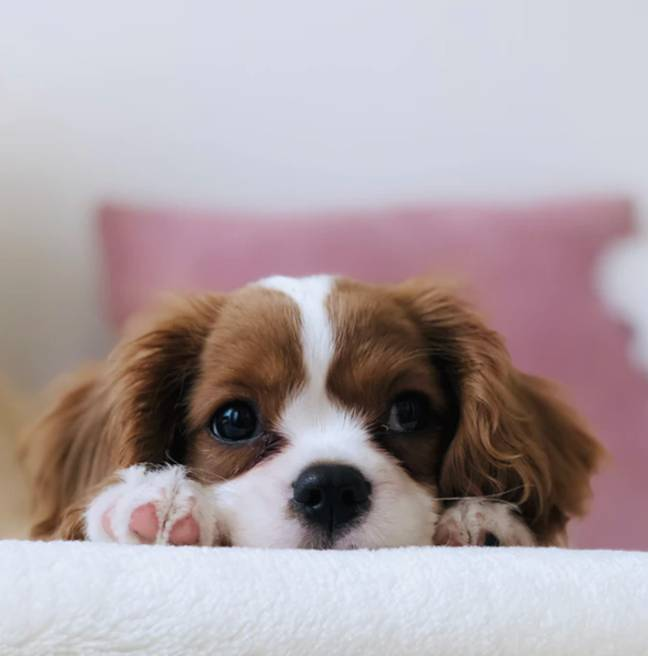 Theres a reason your dog's name is so popular (Credit: Unsplash)