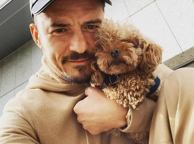 The adorable pup has been reported missing (Credit: Orlando Bloom/Instagram)