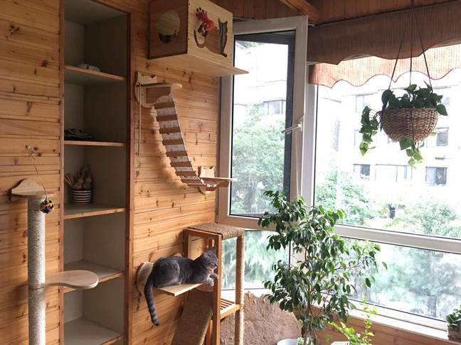 Cat bridges are perfect for felines, such as this cheaper New Zealand radiata wood version from Amazon. (Credit: Amazon/HC)