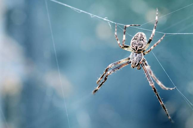 Prepare to see some very angry spiders (Credit: Unsplash)