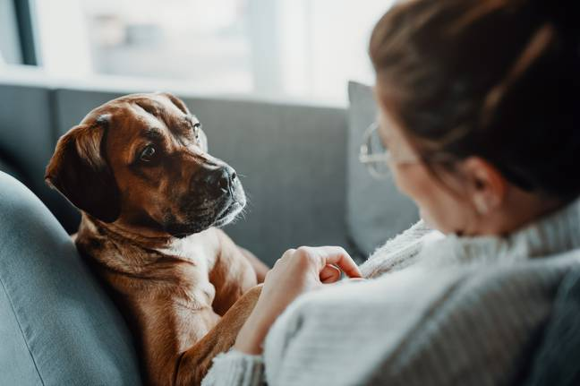 The team repeated the study with 34 different dogs (Credit: Shutterstock)