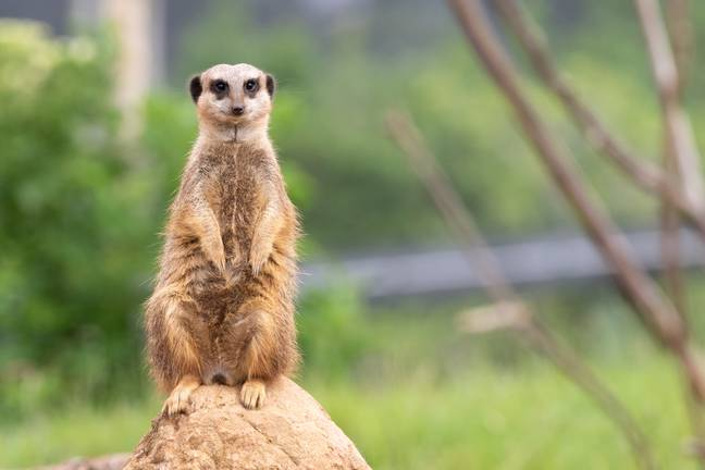 This week Chester Zoo created a JustGiving page to help raise funds towards the £465k a month it needs to look after its animals. (Credit: Shutterstock)
