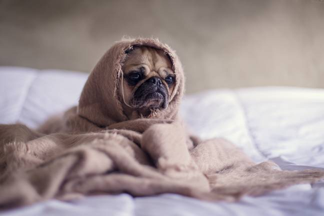 One in five said their dog doesn't like to go out in bad weather. Credit: Unsplash