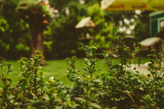 Spaces on offer range from small gardens to castle grounds (Credit: Unsplash)