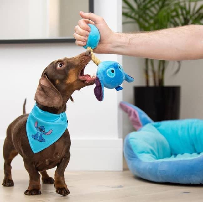 The Pets Collection comes as part of Primark's wider Disney Stitch range (Credit: Primark / Instagram - jacob_n_bruno)