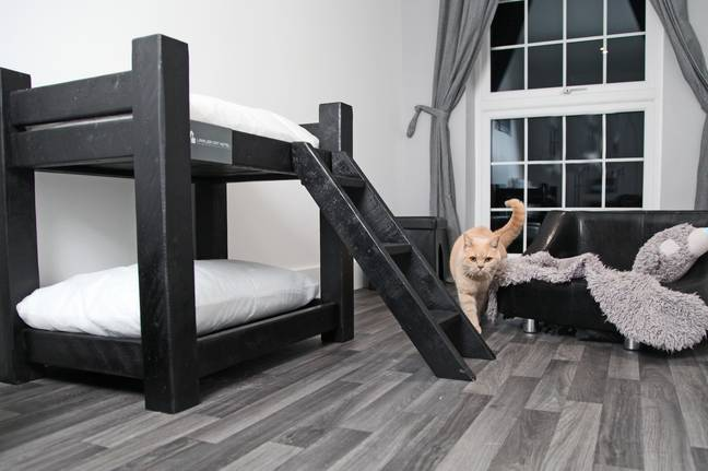 There are 23 suites in the five star cattery (Credit: Caters)
