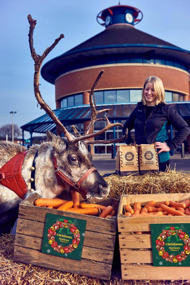 This reindeer certainly seems to have no qualms about the carrots being wonky (Credit: Morrisons)