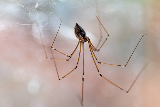 Spraying peppermint oil could help keep them at bay (Credit: Shutterstock)