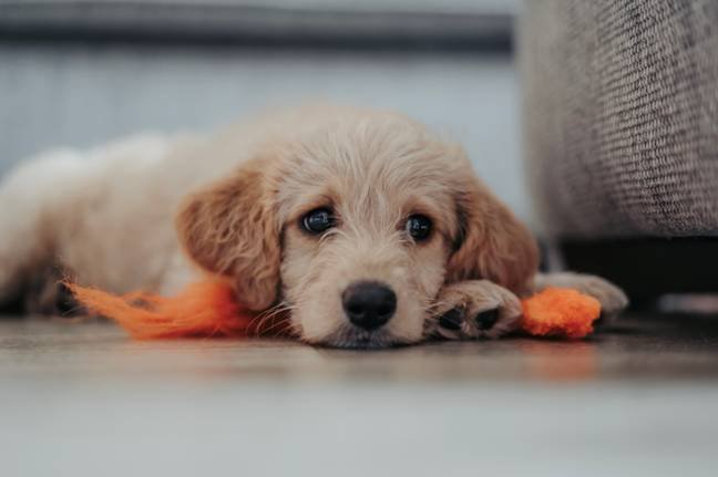Animal cruelty has been recognised as a more serious crime by the government (Credit: Unsplash)
