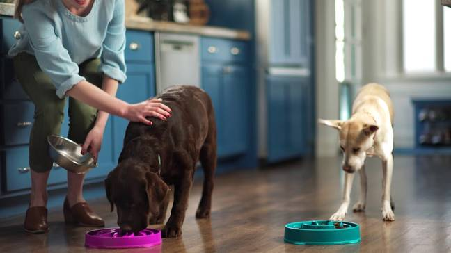 The bowls feature raised edged and complex patterns to slow down your dog's eating time (Credit: YouTube)