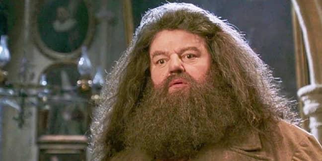 Hagrid placed third (Credit: Warner Bros)