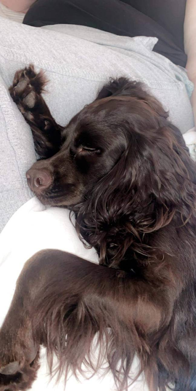 Ralph taking a nap during his recovery (Credit: PDSA)