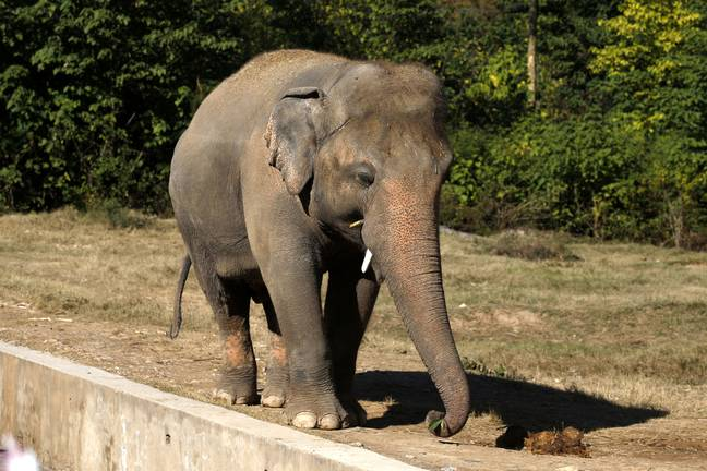 Elephants are very social animals, and the loss of Saheli was devastating for Kaavan (Credit: PA)