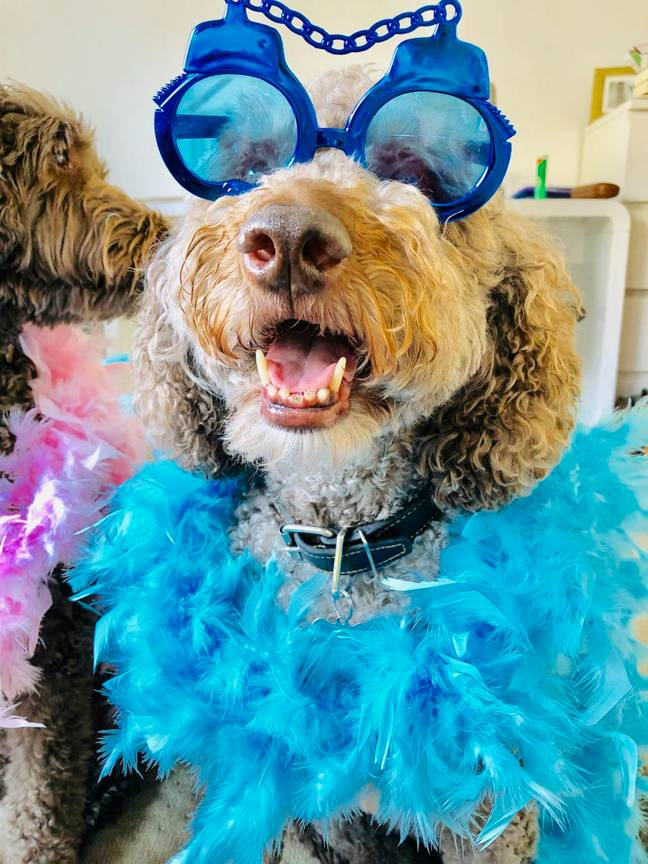 Some of the parties are fancy dress, making them even more fun for the doggos' parents (Credit: Caters/Mercury)
