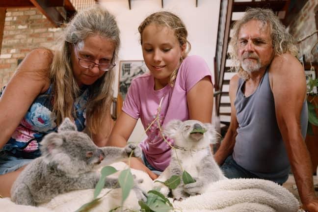 Helping adorable koala bears has always been Izzy's passion (Credit: Netflix)