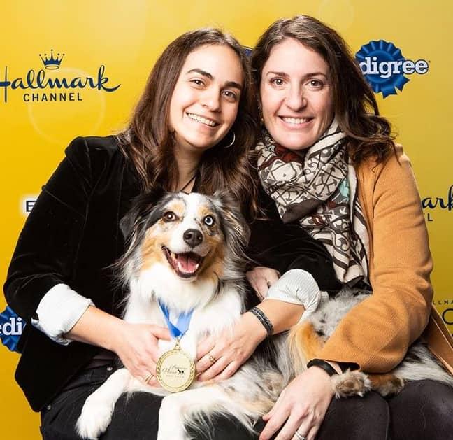 Babka was thrilled to scoop 'Best in Wiggle Butt' in 2019, winning $5,000 for Aussie Rescue San Diego and Friends (Credit: Hallmark Channel)