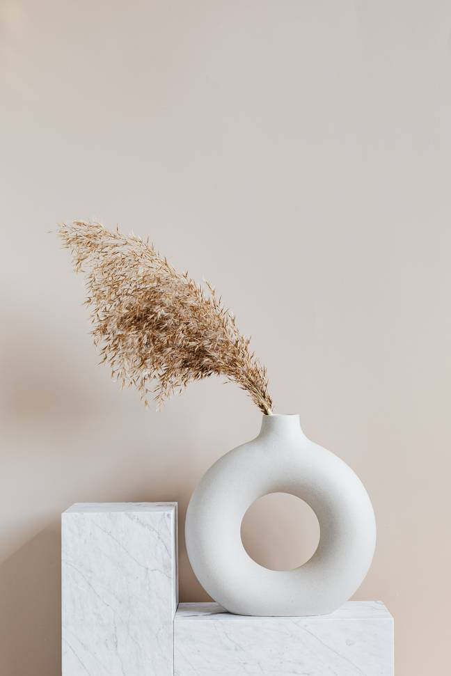 Pampas grass's neutral colouring and soft texture makes it great for home decor (Credit: Pexels)